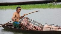 Người dân Nghệ An tất tả 'ôm' gia súc chạy lũ