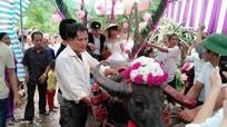 Nghệ An: Màn rước dâu vượt lũ bằng xe trâu 'độc nhất vô nhị'