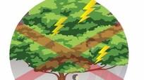 Kỹ năng phòng ngừa tai nạn thương tích mùa mưa bão