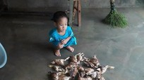 Những hình ảnh đau lòng trong đợt lũ lịch sử ở Nghệ An