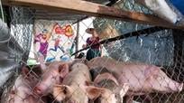 Người dân làm lán cho lợn chạy lũ