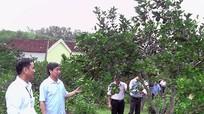 Thẩm định nông thôn mới tại 2 xã của huyện Yên Thành