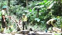 Thủ tướng Nguyễn Xuân Phúc: 'Các địa phương có rừng phải phát triển được từ rừng'