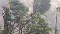 Vẫn còn 4 cơn bão 'rớt' đổ bộ vào Việt Nam