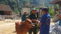 Trao 60 con bò giống sinh sản cho hộ nghèo xã biên giới