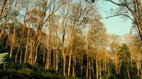 Đại biểu Nghệ An đề nghị Quốc hội tiếp tục giao rừng sản xuất cho dân