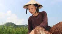 Nông dân vùng cao tái sản xuất rau màu sau mưa lũ