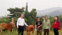 Trao bò giống cho hộ nghèo xã biên giới Anh Sơn