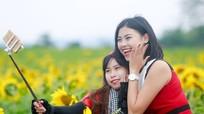 Năm nay, rừng 'hoa mặt trời' 60 héc ta ở Nghệ An tiếp tục tỏa sắc