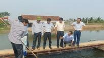 Nuôi cá theo công nghệ 'tạo sông trong ao' thu tiền tỷ ở Nghệ An