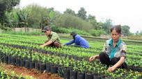 Nghệ An: Không nhất trí với đề nghị 'mở cửa rừng' của doanh nghiệp