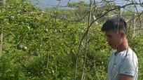 Dân bản xin giảm tội cho hai thanh niên chặt phá 1200 cây chanh leo