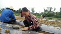 Nông dân Anh Sơn xuống giống hơn 500 ha rau màu vụ đông