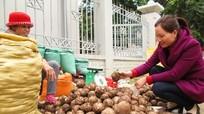 Kỳ Sơn xây dựng đề án mở rộng diện tích trồng khoai sọ