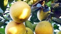 Nông dân Nghệ An được hỗ trợ 10.000 USD để phát triển sản phẩm từ cam
