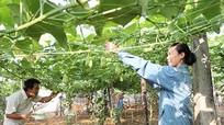 Nghệ An là tỉnh duy nhất trong cả nước có 'hưu nông dân'