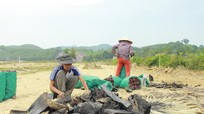 Dân bản ra suối vớt củi đốt than bán