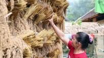 Độc đáo giàn phơi lúa rẫy của đồng bào vùng cao