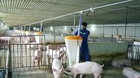 Nghệ An dự kiến xây dựng trang trại lợn hạt nhân công nghệ cao