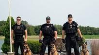 Bí mật loài chó nghiệp vụ tinh nhuệ của mật vụ Mỹ