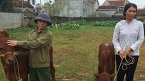 Trao 24 con bê sinh sản cho hộ nghèo ở Quỳnh Lưu