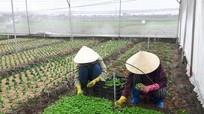 Nông dân Quỳnh Lưu sản xuất rau che phủ lưới hiệu quả cao