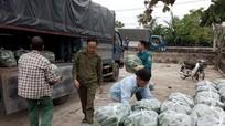 Doanh nghiệp thu mua 350 tấn dưa chuột sạch cho nông dân Diễn Châu