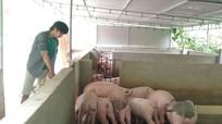 Hiệu quả từ nuôi giun quế tạo phân vi sinh