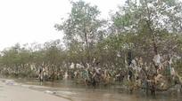 Rừng bần ở Nghệ An bị rác thải bức tử
