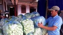 Làng rau lớn nhất Nghệ An xuất bán hàng chục tấn mỗi ngày