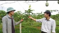 Nghệ An: 11 tháng ước đạt trên 271 triệu USD kim ngạch xuất khẩu nông lâm thủy sản Nghệ An đạt