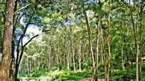 Định hướng hoạt động mạng lưới khu dự trữ sinh quyển thế giới tại Việt Nam