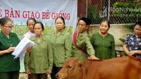 Hiệu quả chương trình hỗ trợ bê cho cựu thanh niên xung phong của Vingroup