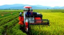 Tránh 'vỡ trận' trong thực hiện chính sách hỗ trợ nông nghiệp