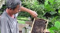 Yên Thành xây dựng thương hiệu mật ong Tràng Kè