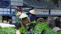 Nghệ An trồng mới trên 17.646 ha rừng