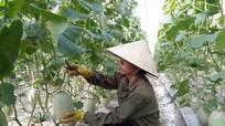 Con Cuông: Hỗ trợ 10 tỷ đồng giúp nông dân phát triển sản xuất