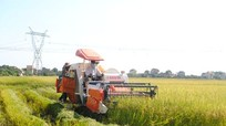 Chậm cấp bìa đỏ đất nông nghiệp sau dồn điền đổi thửa