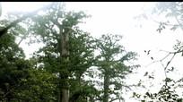 Cử tri miền núi: 'Không giao đất rừng sản xuất, dân sống bằng gì?'