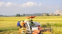 Năm 2017, Nghệ An đạt hơn 1,2 triệu tấn lương thực