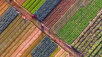 Ngỡ ngàng vẻ đẹp làng rau lớn nhất Nghệ An ngày cuối năm