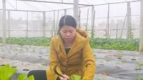 Nhà lưới trồng rau, củ quả công nghệ cao thu nhập 1-1,5 tỷ đồng/ha/năm