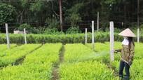 Bảo vệ, phát triển rừng bền vững gắn với sinh kế của người dân