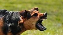 Nghệ An: Nữ sinh lớp 9 tử vong vì bị chó dại cắn
