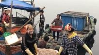 Ruốc biển được giá, ngư dân Nghệ An phấn khởi