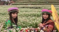 Đồng hoa tam giác mạch Nghệ An thu hút hàng ngàn khách mỗi ngày