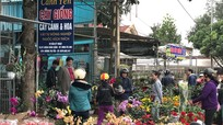 Nhộn nhịp thị trường hoa, cây cảnh trên Quốc lộ 48