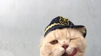 Chú mèo bán cá gây chú ý trên mạng xã hội