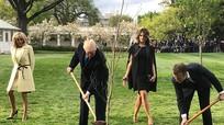 """Cây sồi """"gắn bó"""" Trump trồng cùng Macron biến mất khó hiểu"""