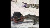 Hãi hùng: Cá sấu đớp gần đứt tay huấn luyện viên khi đang biểu diễn